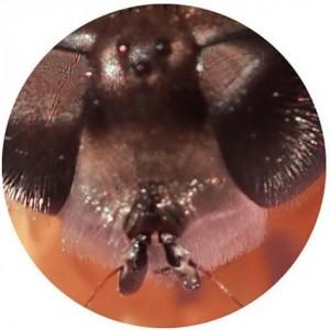 Ortung Biene II