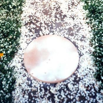 Kirschblütenall